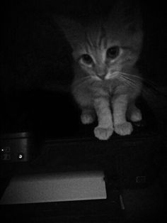 Jules on my printer
