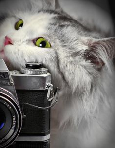 "magicalnaturetour: "" Cat and camera by *2b4guitars :) """