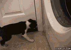 Dog VS Door Stopper - www.gifsec.com