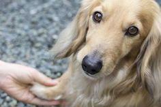 i pericoli per i cani in estate