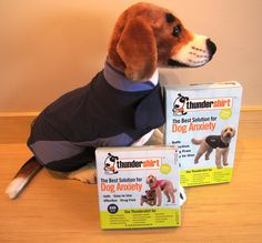 Does your dog have seperation anxiety or have a severe thunderstorm phobia? Thundershirts may be the answer you didn't know you were looking for! These shirts work by applying pressure to your dog's chest to help them feel comforted, and soothe their anxiety over being left alone or hearing loud noises. Stop in to try one out today!