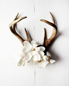 deer horns with flowers. **sorry bout the deer horn explosion guys 😒 but this is just tacky enough to be my style 😂 Turbulence Deco, Deco Nature, Antler Art, Deer Antler Crafts, Antler Mount, Oh Deer, Deer Antlers, Deer Skulls, Deer Horns Decor