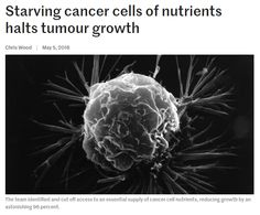 Starving cancer cells of nutrients halts tumour growth Undeterred, the team continued its work, and eventually managed to disable the second gateway using a technique known as RNA silencing. Combined, the two steps has an astonishing positive impact – without access to glutamine, cancer cell growth rate dropped by a huge 96 percent.