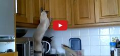 This Kitty Was Caught Red-Handed! But What is He Stealing?