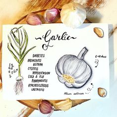 Garlic - Knoblauch - Healthy art Cystitis, Food Journal, Natural Healing, Inspire Me, Garlic, How To Get, Cold, Healthy Recipes, Illustration