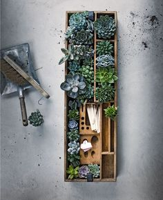 To bring some magic into your garden, try one of these succulent garden ideas. Succulents are beautiful for displays and require little attention. Indoor Garden, Garden Plants, Indoor Plants, Outdoor Gardens, Vegetable Garden, Cactus Y Suculentas, Green Garden, Cacti And Succulents, Garden Projects
