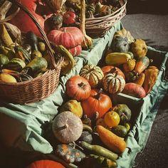 Pumpkins  Colorno, Italia