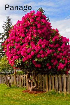 10pcs Hydrangea Tree Bonsai Rare Multi-color perennial flower outdoor plant pot for garden hydrangea flower easy to grow. Yesterday's price: US $1.20 (1.05 EUR). Today's price: US $0.46 (0.40 EUR). Discount: 62%.