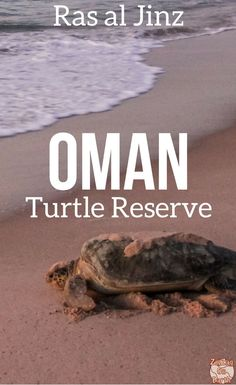 Oman Travel Guide - Visit the turtle reserve at Ras ak Jinz - See the turtles make they way back to the sea! Photos and planning tips | Oman things to do | Oman itinerary