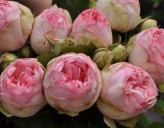 Rose Charming Piano - Поиск в Google