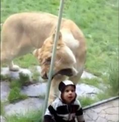 Whoa! Lucky for the kid there is glass!