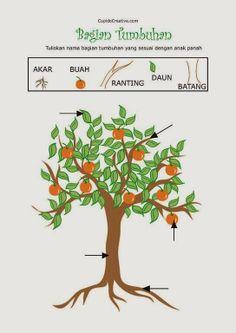 belajar nama bagian tumbuhan untuk anak TK, belajar menulis