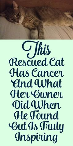 This Cat Has Cancer And What Her Owner Did Melted Our Hearts!
