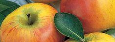 Æblesnaps (Charlottes Opskrift) | Kryddersnapse