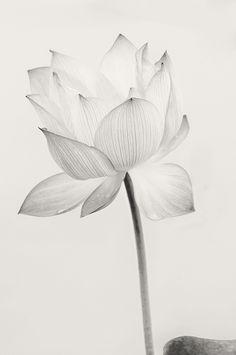 Transluscence by usha peddamatham