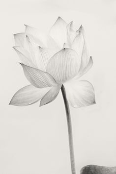 chinese lotus art