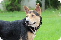 Nashua, NH - German Shepherd Dog Mix. Meet Yvette, a dog for adoption. http://www.adoptapet.com/pet/12823828-nashua-new-hampshire-german-shepherd-dog-mix