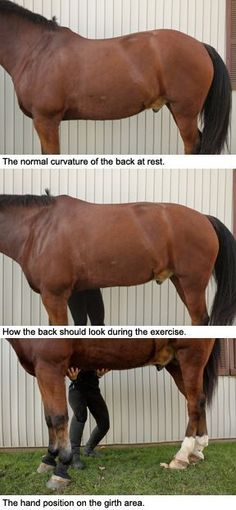 Core Strengthening & Rounding Exercises for Your Horse