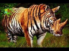 Los Animales Híbridos Más Increíbles del Planeta | Listas DeToxoMoroxo