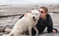 Good article, well worth reading if you own. Dogs. 5 ways to Improve Your Dog's Life