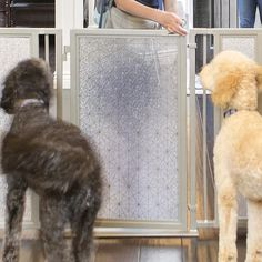 Fusion Gates Baby Gates for Doorway & Gates for Dogs, Linear Lace