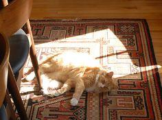 Sunspot.