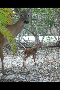 Momma and baby! Big Pine Key, Kangaroo, Baby, Animals, Baby Bjorn, Animales, Animaux, Animal, Baby Humor