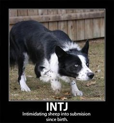 INTJ: Intimidating sheep into submission since birth (*Grins* This was tooooo good not to share) ;-) - A.R. ♥