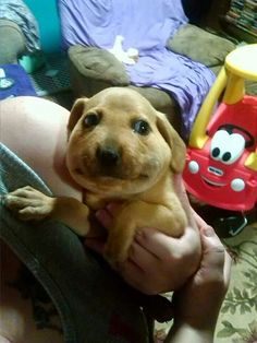 """""""Guysh. Shtop laughing."""" 
