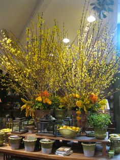 54 best forsythia images on pinterest in 2018 floral arrangements rogers gardens held their spring event and the kick off of their wedding and floral studio this past weekend for you who are not familiar mightylinksfo