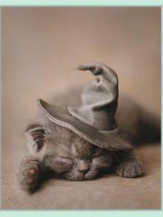 Rachael Hale Witch Cat