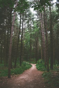 forest tree path in woods