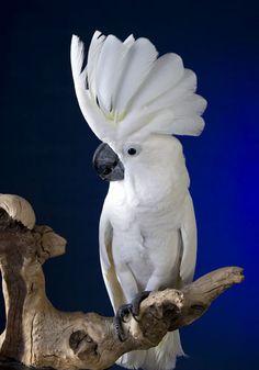 Decipher Your Pet Parrot's Vocalizations