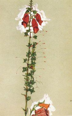 Egon Schiele, Foxglove, 1910