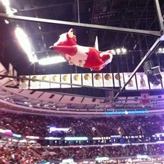Benny the Bull flying over the United Center floor. ~ Chicago, IL