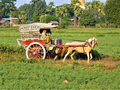 Bagan calèches pour la visite de la vallée Myanmar 2014