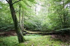 Im April sind wir wieder in der Nähe des Naturpark Kellerwald-Edersee  ... #wald #kellerwaldedersee #hessen
