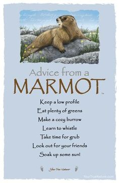 Advice from a Marmot- Postcard- Your True Nature Animal Spirit Guides, Spirit Animal, Advice Quotes, Life Quotes, Nature Quotes, Advice Cards, True Nature, Animal Totems, Oracle Cards