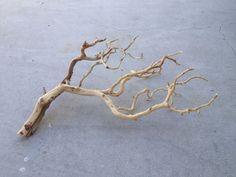 BW20 Manzanita branch wood -- driftwood plant shrimp moss discus Anubias Crypt