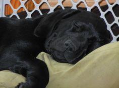 sweet dreams labby!