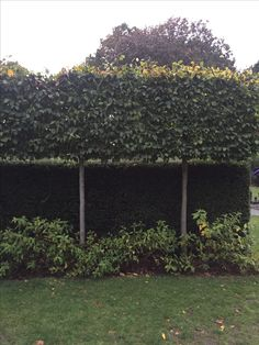 19 Amazing Privacy Along Wall Images Garden Fencing Garden Beds