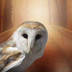 Free Pictures, Free Images, Screech Owl, Hedwig, Bird, Landscape, Friends, Nature, Painting