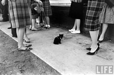 Fancy vintage ladies and cats on leashes are a match made in heaven. A 1961 casting call for 'The Black Cat' from the Life archive.