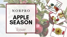Norpro allies for apple season; all the gadgets you'll need Weck Jars, Canning Jars, Preserving Apples, Fruit Sauce, Steam Veggies, Apple Season, Different Textures, Recycled Glass, Chrome Plating