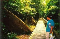 Boardwalk that leads to Niah Caves in the national park where locals climb to the roof of the cave to collect bird nests for bird nest soup.