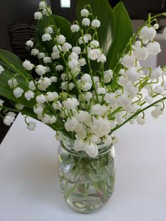 Lily of the valley from my front yard. Smells heavenly.