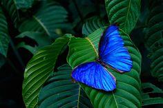 Befriend a Butterfly