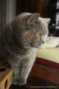 """""""It always gives me a shiver when I see a cat seeing what I cannot see."""" --Eleanor Farjeon"""