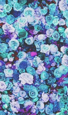 Blue, Roses, Picture, Floral