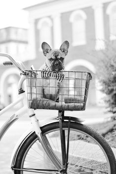 my life dream. Dog in a basket!!